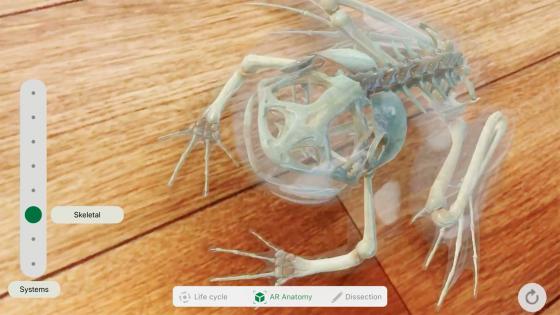 Обзор iPad 2018 - приложение Froggipedia (фото 3)